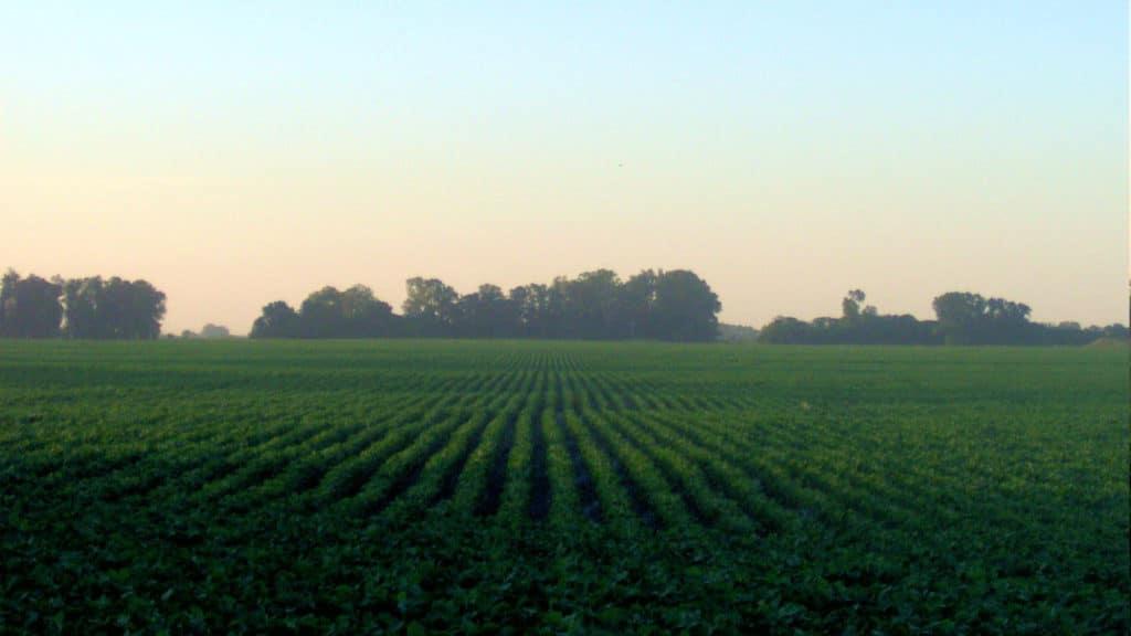 Soybean Field HERO